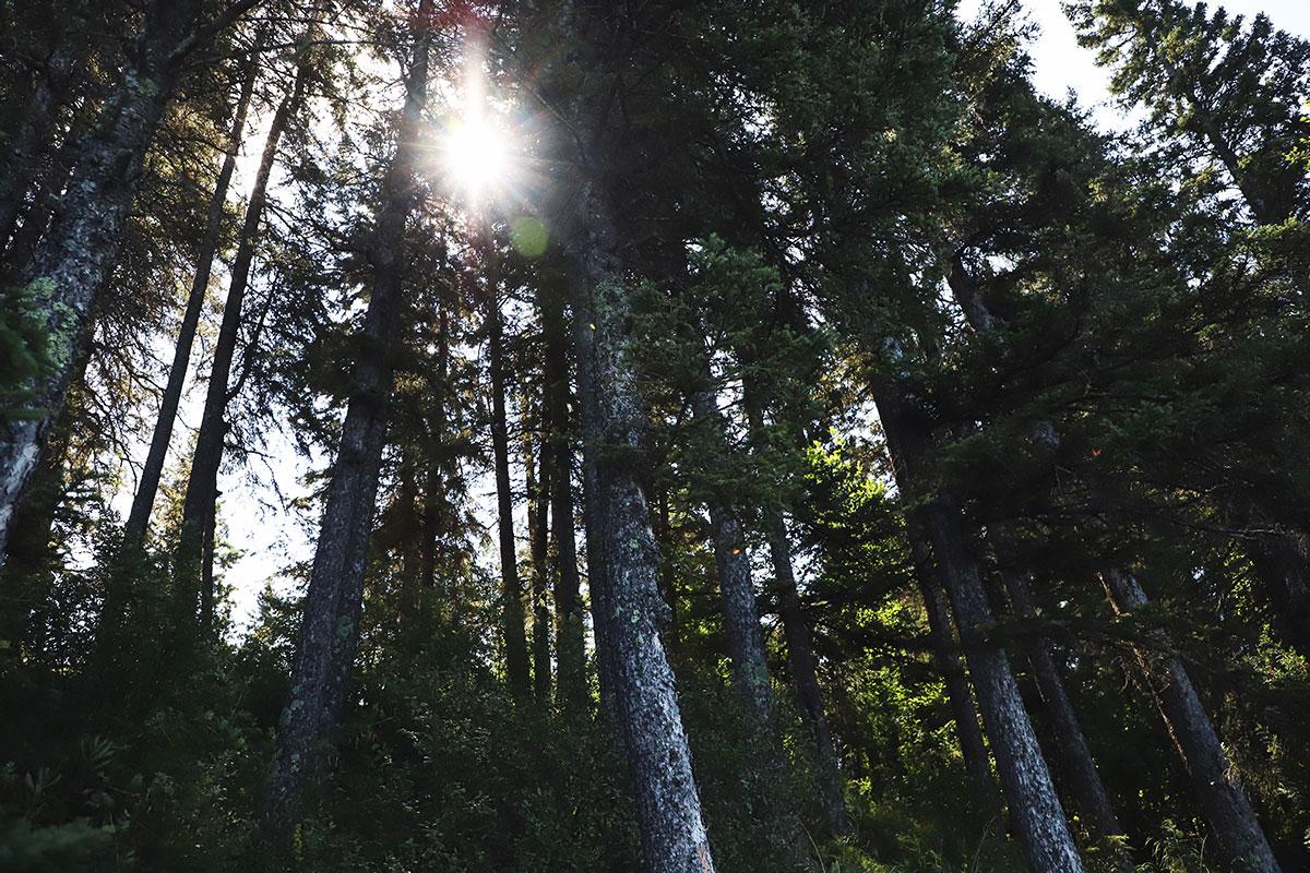 Sun peeking through trees.